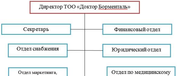 Рисунок 2 - Организационная структура управления ТОО «Доктор Борменталь»