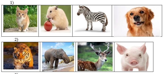 Игра «Where is an animal?»