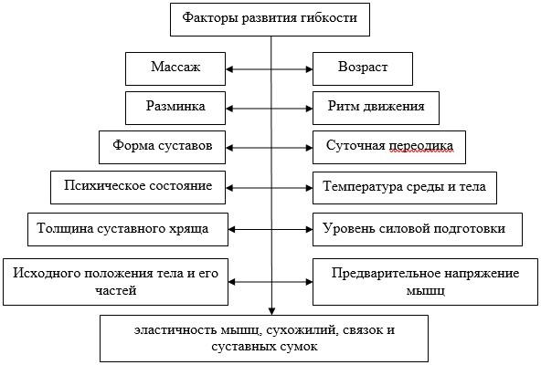 Факторы развития гибкости