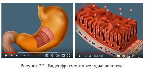 Видеофрагмент о желудке человека_экзамен на 5_диплом